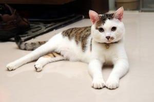 皮蛋長大了,現在是大公貓了