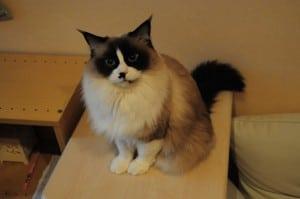 [東京‧秋葉原] 保證15匹肉貓的 ねこ・JaLaLa