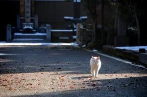 [東京] 谷根千散步看貓‧富士見坂遠眺富士山