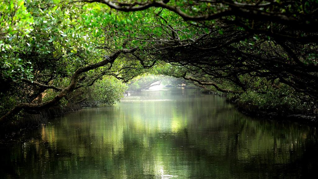 台南四草綠色隧道(台江國家公園)、七股鹽山巨型招財貓、北門水晶教堂