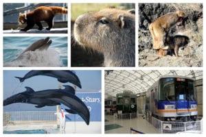 能摸到可愛動物水豚、看海豚秀、還能駕駛電車的大阪 Misaki 公園